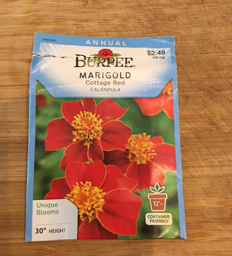 Cottage Red Burpee Marigolds