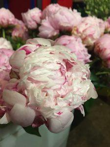 Bucket O'Flowers DIY Peonies