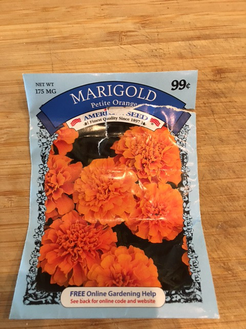 Marigold seeds dollar store