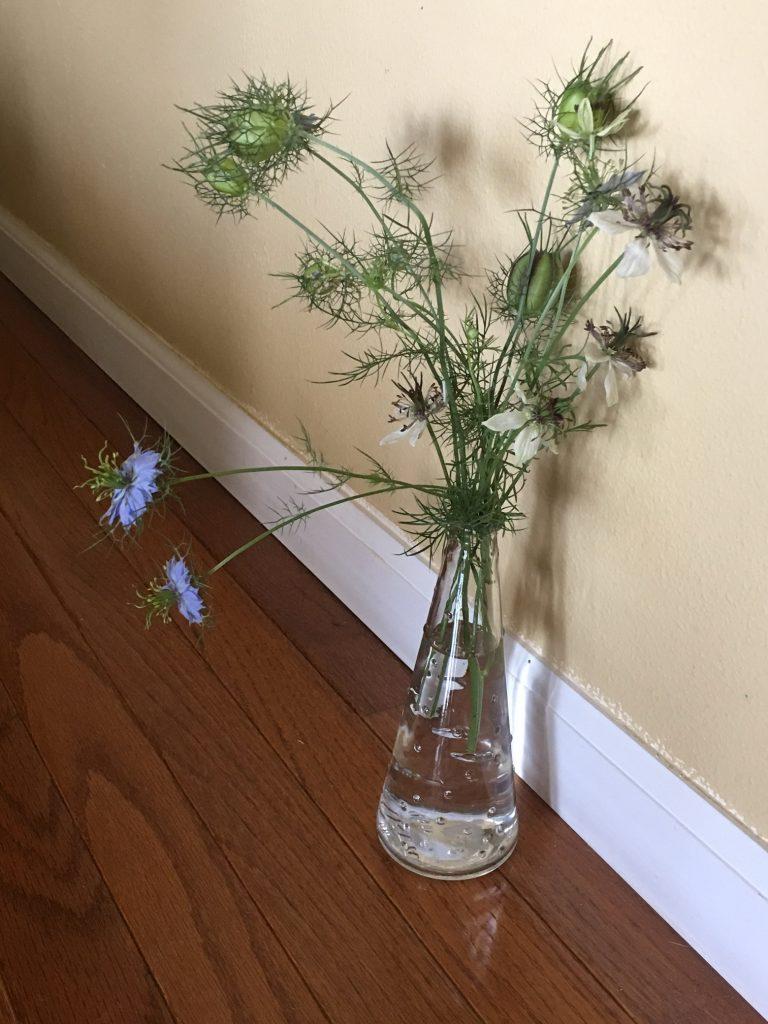 Nigella in Vase