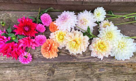 Dahlias Bouquets