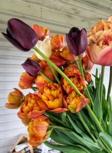 Tulips locally grown